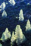 Glowing Trees Stock Image