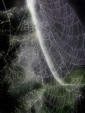 Glowing Web. A spider web glowing in the morning sun with sparkling bits of dew Stock Photo