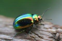 Glowworm - green bug Stock Images