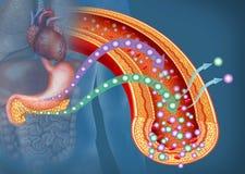 Glucose en Insuline in Diabetes, beschrijvende illustratie vector illustratie