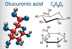 Glucuronic acid molecule, plays an important role in the metabol. Ism of microorganisms, plants and animals. Structural chemical formula and molecule model Stock Image