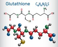 Glutathione GSH molecule, is an important antioxidant in plant. S, animals and some bacteria. Structural chemical formula and molecule model. Vector illustration vector illustration