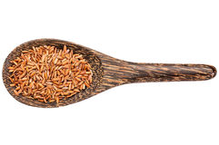 Gluten free brown rice grain Stock Image