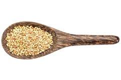 Gluten free buckwheat pseudograin Royalty Free Stock Images