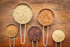 Gluten free grain collection Royalty Free Stock Photography