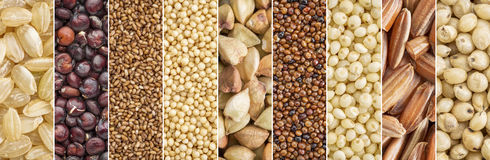 Gluten free grains collection. Brown rice, quinoa, teff, amaranth, buckwheat, kaniwa,millet, sorghum - a collage image Royalty Free Stock Photos