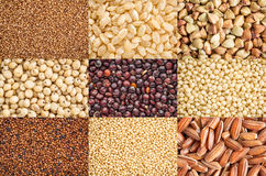 Gluten free grains collection. Nine healthy, gluten free grains (black quinoa, two varieties of brown rice, millet, amaranth, teff, buckwheat, sorghum, kaniwa) Royalty Free Stock Image