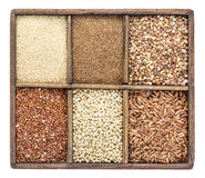 Gluten free grains in rustic box. A variety of gluten free grains (buckwheat, amaranth, brown rice, millet, sorghum, teff,  red quinoa) in a rustic wooden box Royalty Free Stock Photos