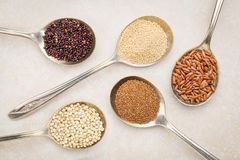 Gluten free grains on tablespoons. Gluten free grain )black quinoa, amaranth,brown rice, teff and sorghum) on old metal tablespoons against ceramic tile Stock Photos