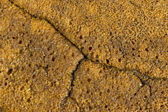 Gluten free homemade bread. Crust closeup view Stock Photos