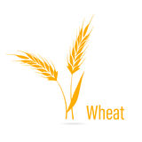 Gluten free icon. Ears of Wheat. Royalty Free Stock Images