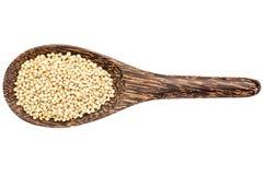 Gluten free sorghum grain Stock Image
