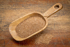 Gluten free teff grain Stock Photo