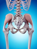 The gluteus medius Royalty Free Stock Photo
