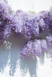 Glycines Image stock