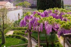 Glyzinie in der Blüte im Garten des Landhauses Rufalo in Ravello, Amalfi-Küste, Sorrent, Italien Lizenzfreies Stockbild