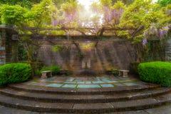Glyzinie, die auf Gitter am Garten-Patio blüht lizenzfreies stockfoto