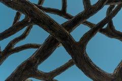 Gmatwanina imitacja Rozgałęzia się na niebieskim niebie Obraz Stock