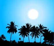 gömma i handflatan den tropiska silhouettesolnedgångtreen Arkivbild