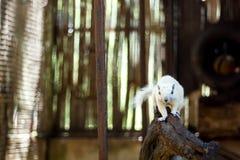 gömma sig white Royaltyfria Bilder