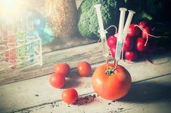 GMO基因上修改过的食物概念 库存照片
