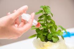 gmo实验室种植研究员 免版税库存图片