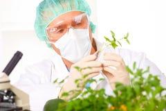 gmo藏品蔬菜的实验室研究员 免版税库存照片