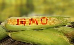 GMO食物 库存照片