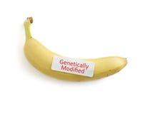 GMO香蕉 免版税库存图片