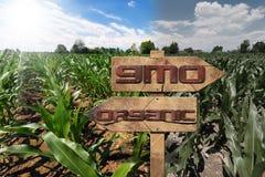 GMO и органический знак на кукурузном поле Стоковые Фотографии RF