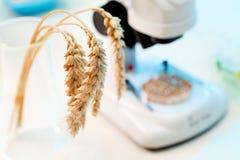 GMO Fotografia Stock