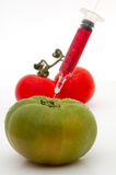 Gmo. Red and green tomato gmo stock images