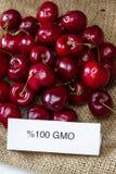 GMO cherries Stock Image