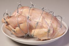 GMO chicken on a white plate stock image