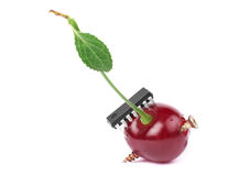 GMO concept. Cherry modified with some hardware. Copyspace added royalty free stock photos