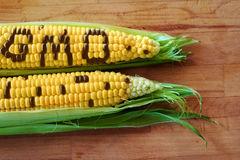 Gmo corn Royalty Free Stock Photo