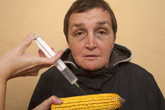GMO corn Royalty Free Stock Photography