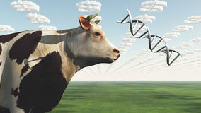 GMO Cow. Big Business Profit GMO Cow Stock Photography
