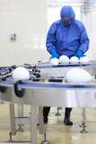 GMO - engineer with xxl size eggs at production l stock images
