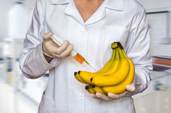 GMO experiment: Scientist injecting liquid from syringe into ban Royalty Free Stock Image