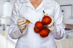GMO experiment: Scientist injecting liquid from syringe into tom Stock Photography