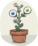 GMO Eye Plant Stock Photography