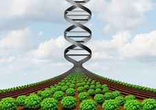GMO Farming Science. GMO farming and agricultural genetics and genetically modified crops or growing food biotechnology science and farm yield technology with 3D royalty free illustration