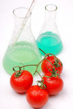 GMO food. Chemical tomato. GMO food concept royalty free stock photos
