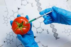 GMO forskare Injecting Green Liquid från injektionssprutan in i den röda tomaten - genetiskt ändrat matbegrepp Arkivbilder