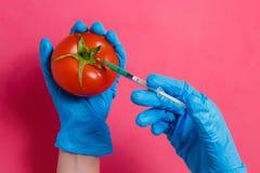 GMO forskare Injecting Green Liquid från injektionssprutan in i den röda tomaten - genetiskt ändrat matbegrepp Royaltyfri Bild