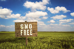 GMO FREE sign on field of rye. Royalty Free Stock Photos