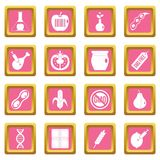 GMO icons pink. GMO icons set in pink color isolated vector illustration for web and any design Royalty Free Stock Image