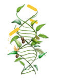 GMO DNA. Illustration of a GMO modified plant and DNA spiral Royalty Free Stock Photos