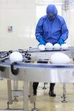 GMO - ingegnere con le uova di dimensione del xxl alla linea di produzione immagini stock